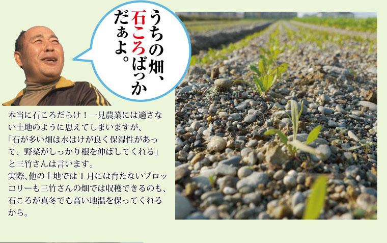 三竹さんのあまっ娘野菜は圧倒的に甘い。海岸まで300m、ミネラル豊富な潮風と寒暖差で甘く