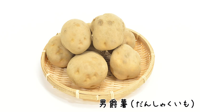 男爵薯 セール