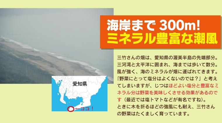 あまっ娘キャベツ 海まで300m