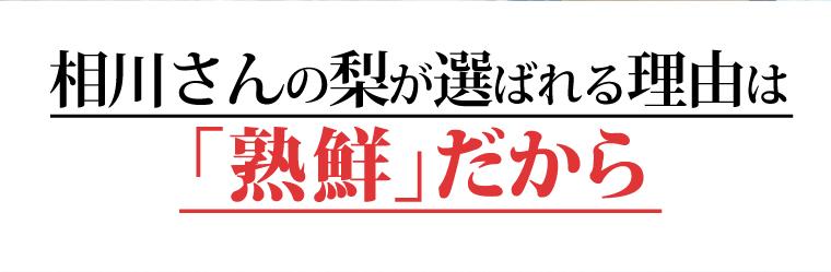 新高 梨 埼玉県 相川崇樹 - 3
