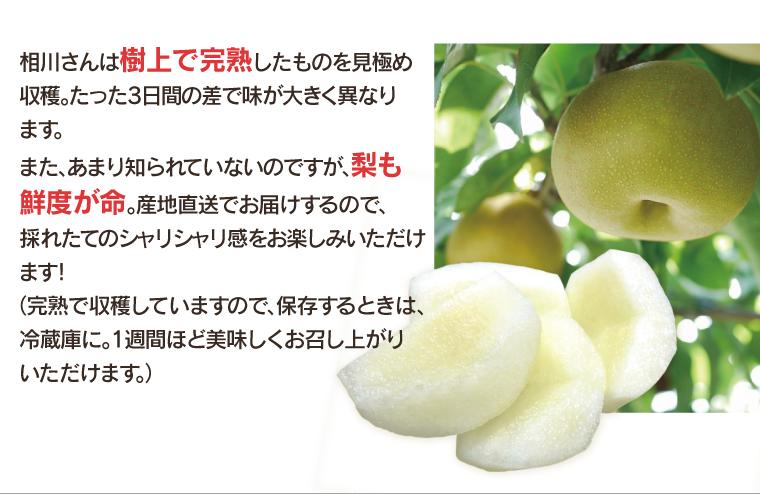 新興 梨 埼玉県 相川崇樹 - 5