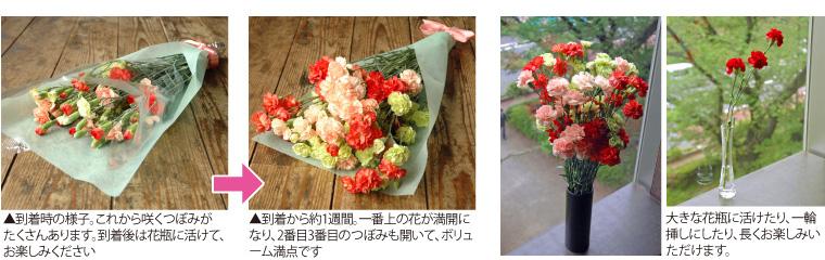到着からどんどん花が咲き、ボリューム満点に!