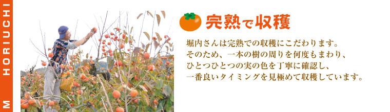 完熟を見極めて最高のタイミングで収穫するので味が濃い。