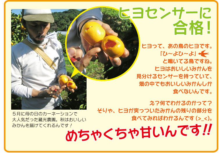 ヒヨはおいしいみかんを見分けるセンサーを持っていて、食べたものはすごく甘いんです!!
