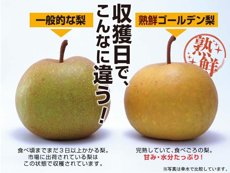 収穫日でこんなに違う!完熟していて食べごろの梨は甘み・水分たっぷり。