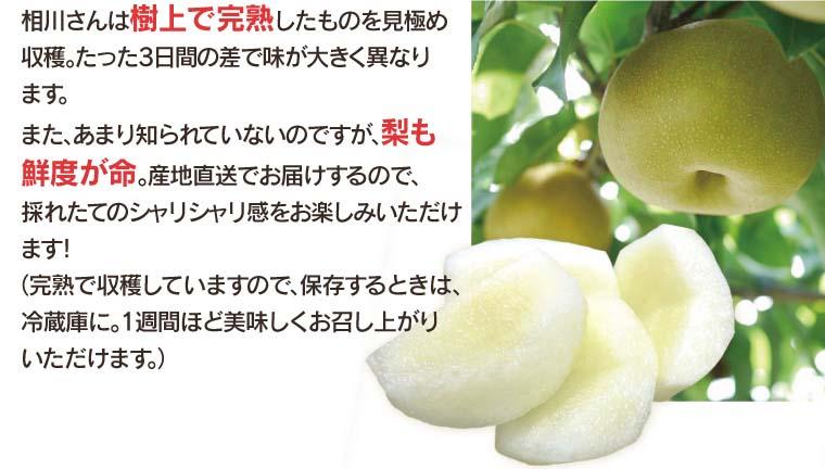 相川さんは樹上で完熟したものを収穫。たった3日間の差で味が大きく異なります。