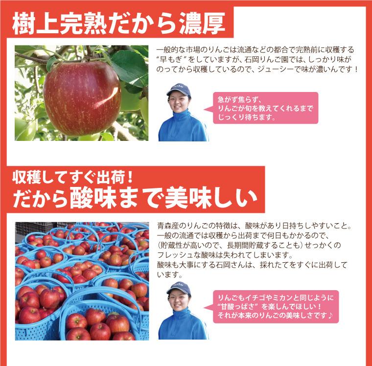 樹上完熟だから濃厚でジューシーなりんご!収穫してすぐ出荷するから酸味まで美味しい。