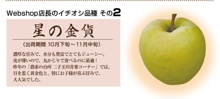 店長のイチオシ「星の金貨」黄金色のりんご、濃厚な甘みでジューシーでお子様に大人気!皮ごと食べるのにオススメ