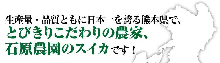 生産量・品質ともに日本一の熊本県で、とびきりこだわりのスイカ農家、石原農園の大玉スイカです。
