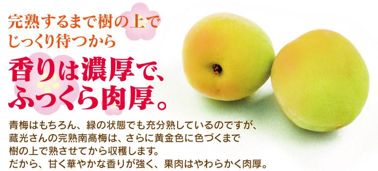 藏光農園の完熟南高梅は、完熟するまで樹の上でじっくり待ってから収穫します。香りは濃厚で、ふっくら肉厚。