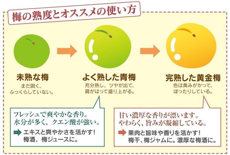 梅の熟度とオススメの使い方