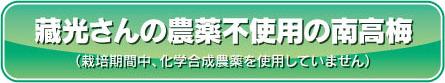 藏光さんの農薬不使用の南高梅(栽培期間中、化学合成農薬を使用していません)