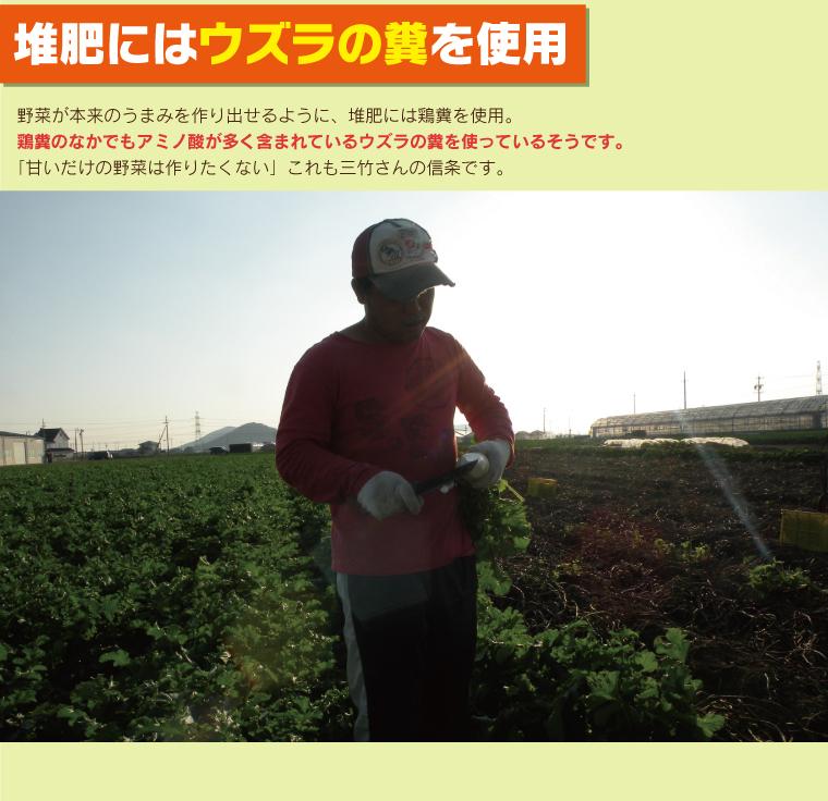 堆肥にはウズラの糞を使用