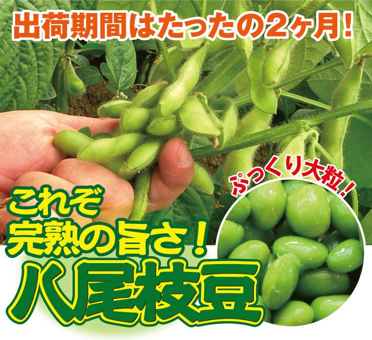 これぞ完熟の旨さ!ぷっくり大粒八尾枝豆