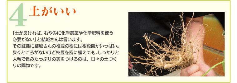 土がいい。結城さんの枝豆の根には根粒菌がいっぱい。