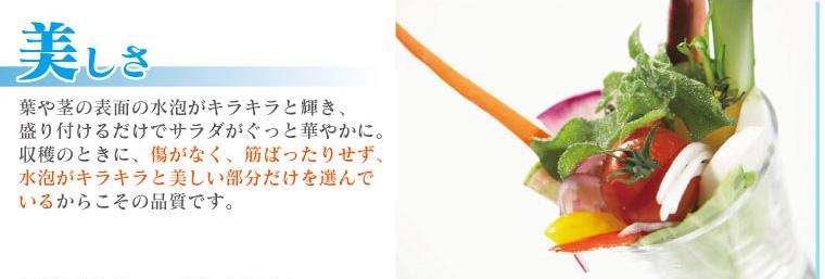 美しさ:ソルトリーフは水泡がキラキラ輝き、サラダがぐっと華やかに。傷がなく、筋ばったりせず、水泡が美しい部分だけを選んでいるからこその品質です。