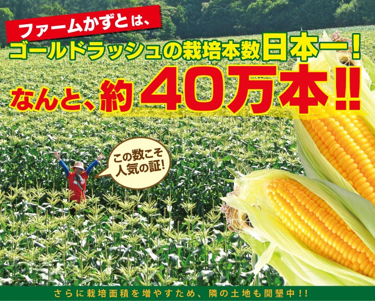 ファームかずとのゴールドラッシュは栽培本数日本一!