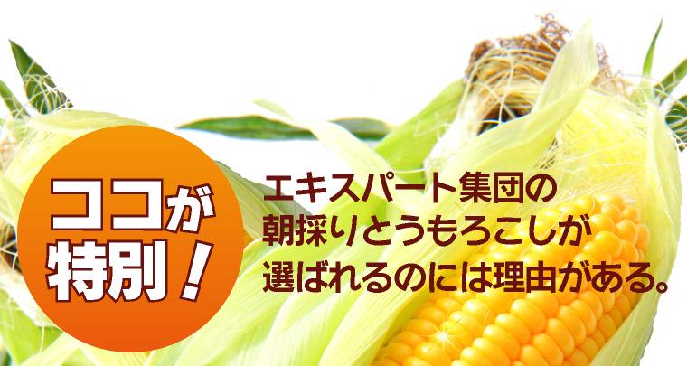 エキスパート集団のトウモロコシが選ばれるには理由がある