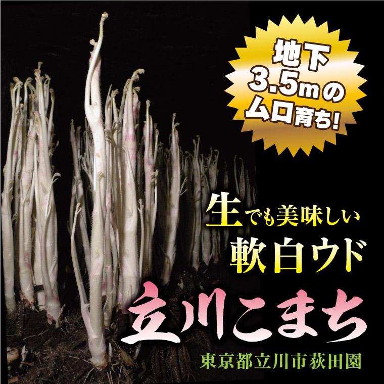 地下3.5mの穴奥育ち!生でも美味しい軟白ウド(東京ウド)「立川こまち」